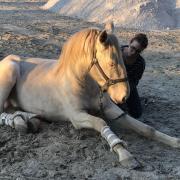 figures de spectacle equestre