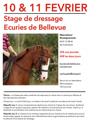 stage de dressage ecuries de bellevue