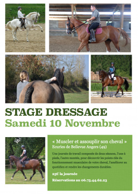 dressage cheval angers