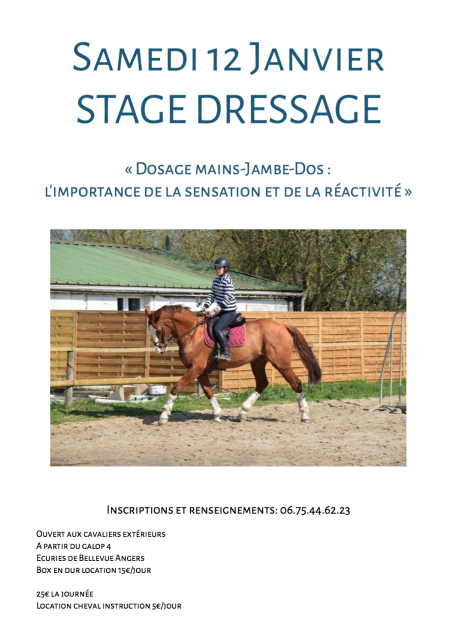 stage dressage angers 2019