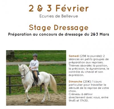 stage de dressage equitation