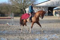 cheval dressage