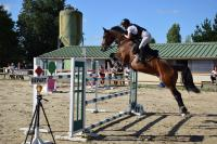 chevaux à vendre