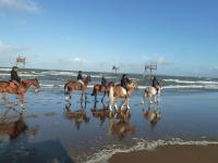plage chevaux